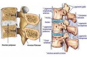 anatomia vertebra cervicale