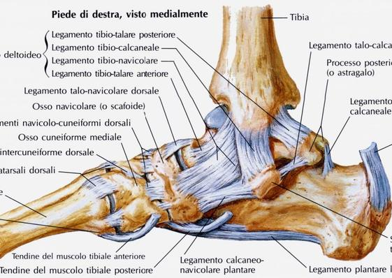 Top La Distorsione alla Caviglia | Una guida passo Passo XT41